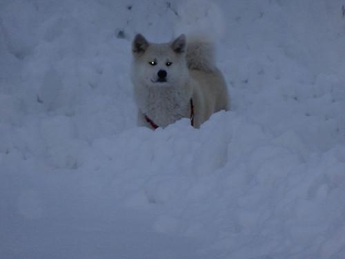 雪が大好き
